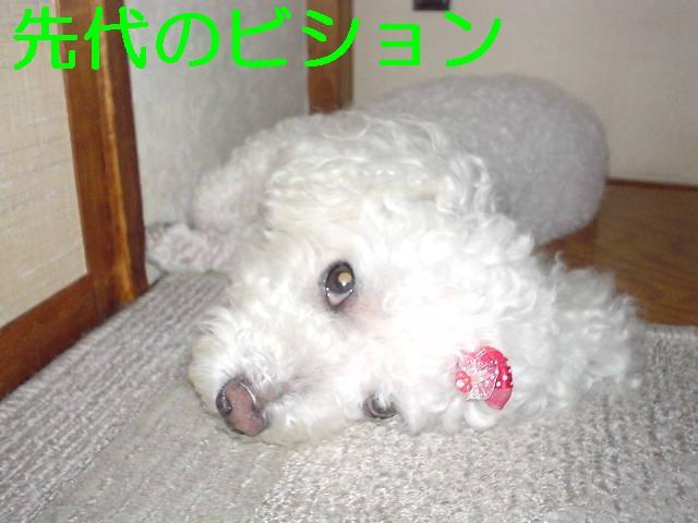 Mari_1