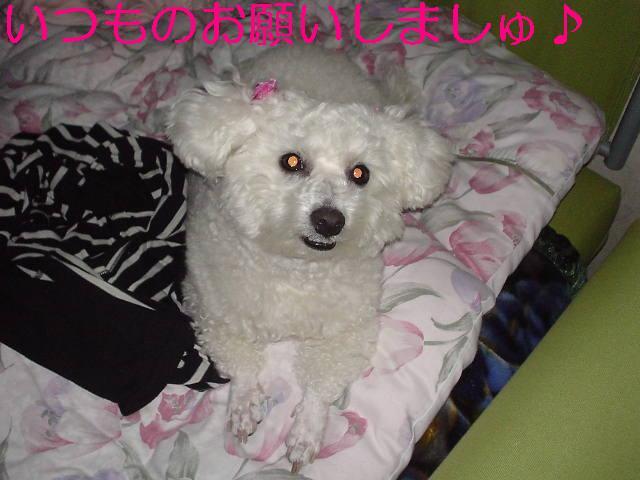 Photo_120