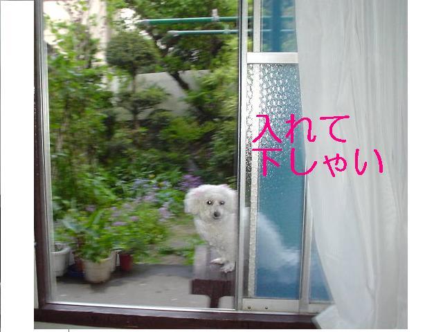 Photo_127