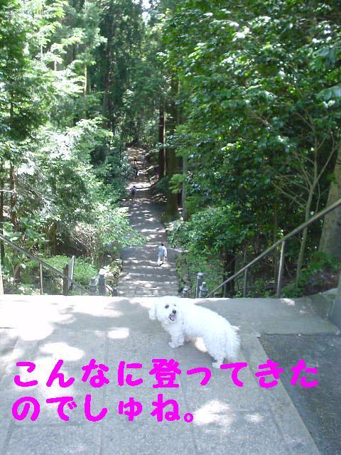 Photo_187