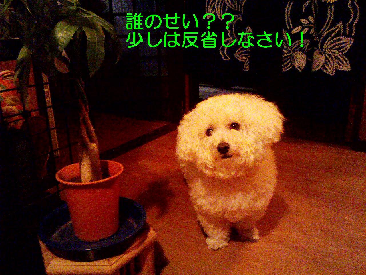 Photo_245
