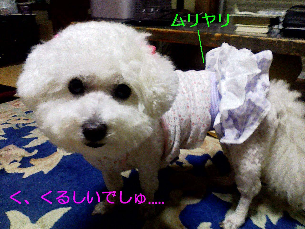 Photo_270